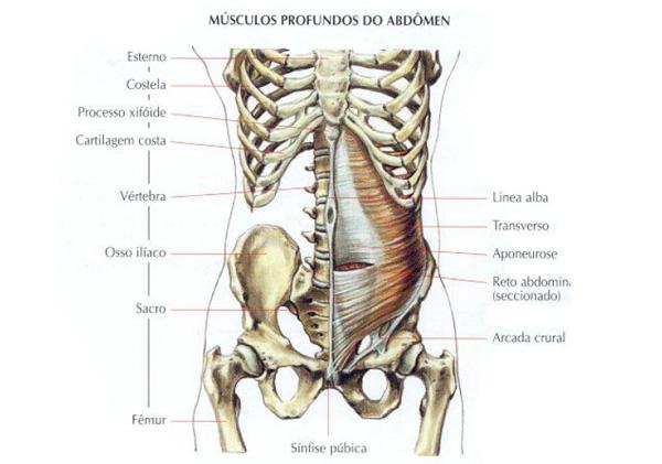 Musculos-abdominais-profundos1